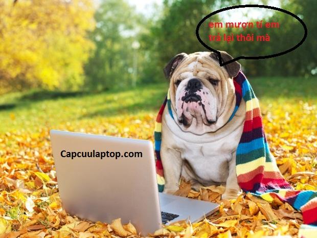 tránh để thú cưng gần vị trí đang làm vệ sinh laptop